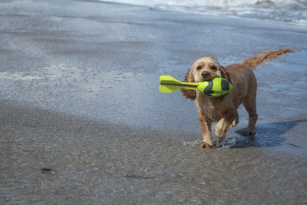 new smyrna beach dog friendly parks